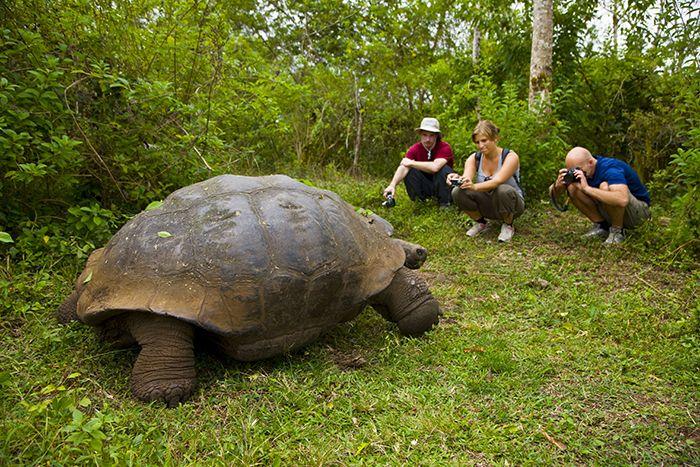 Iles Galapagos Un Paradis Sur Terre Chatelaine Chatelaine Galapagos Animals