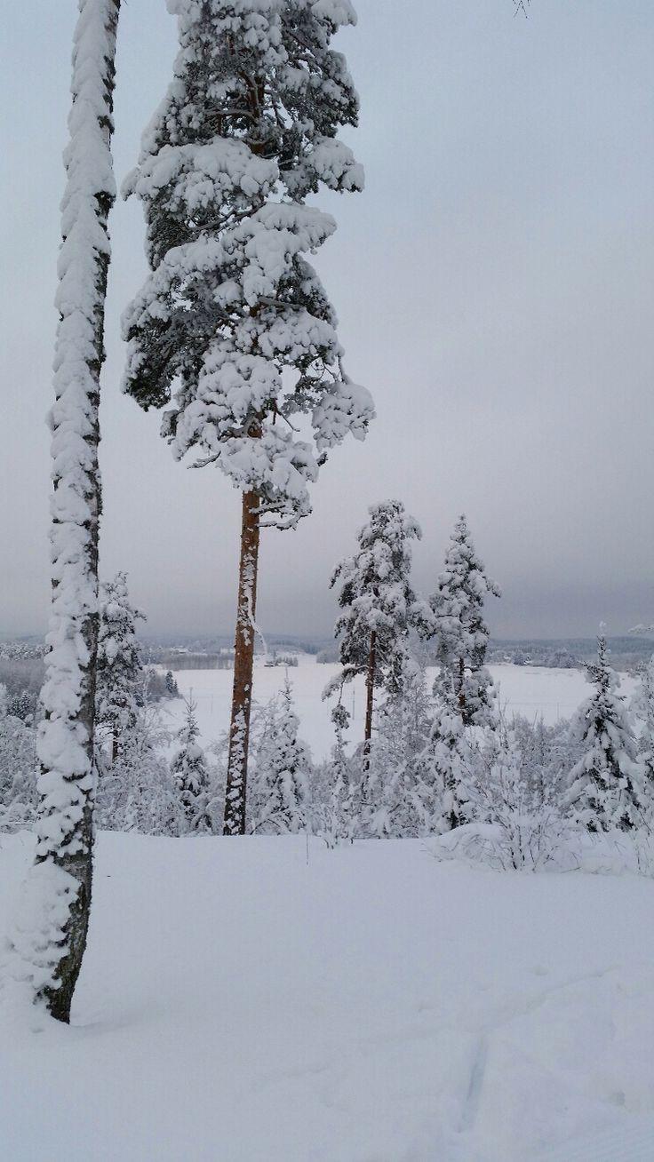 Uudenkylän harjulta Feb 5th 2015, south-eastern Finland. View from skiing track.