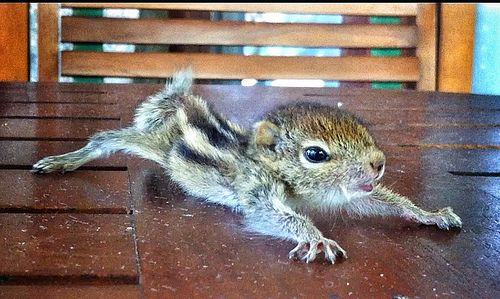Missing Rob the baby squirrel? Here's a cute screenshot - vids to follow eventually!
