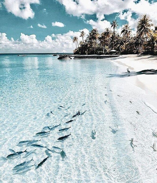 Every New Place Is Fun! #travelho #maldives #beach