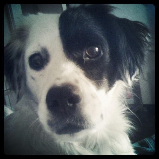 Pola...I love my dog!