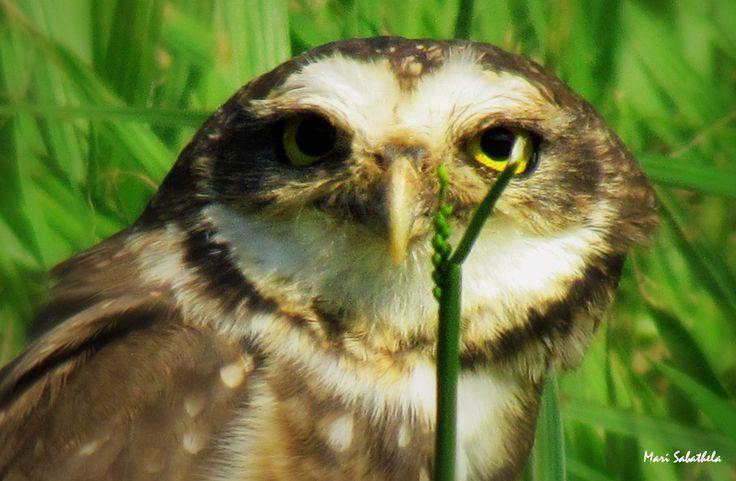 The Owl's Gaze