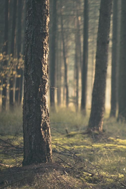 Take me to the wood, and leave me, that my spirit may freely roam.