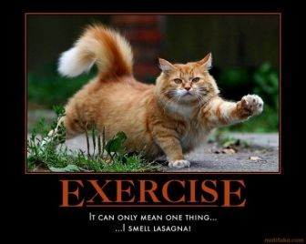 workout motivational posters  cat demotivational poster