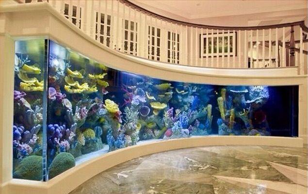 Custom wall Aquarium!