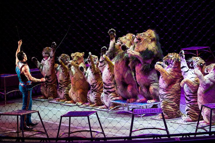 It has been on the road since 1871. But the Ringling Brothers and Barnum & Bailey Circus will shut down after its last show May 21.