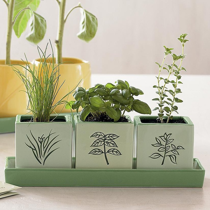 Indoor Herb Garden Food Pinterest