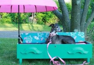 Greyhound sitting in a homemade dog bench