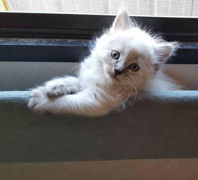 Pflegekätzchen Cybo, das durch ein Fenster kühlt! Eingesandt von Brandi Morgan:   – Cute cats