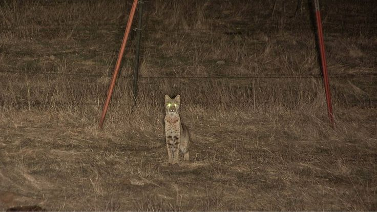 Wild Dogs Best Torch For Hunting