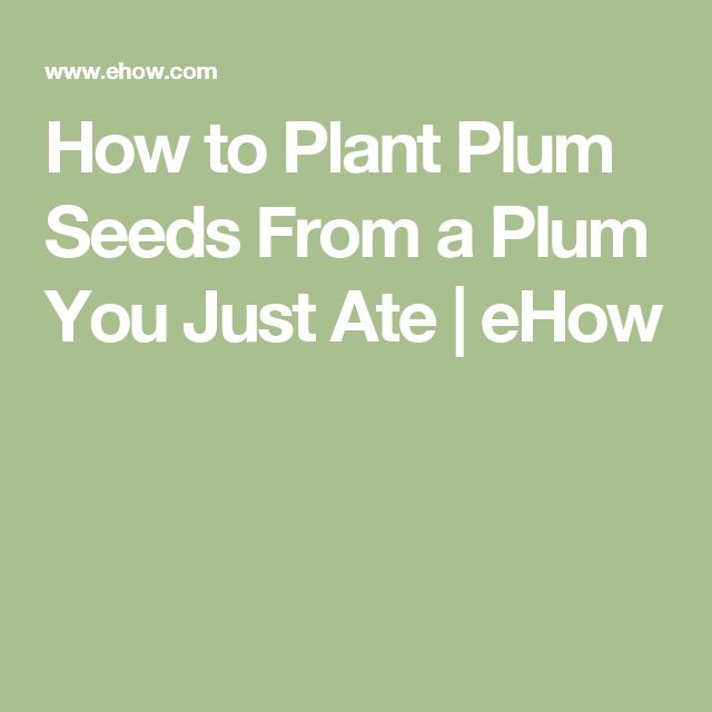 How to Plant Plum Seeds From a Plum You Just Ate | eHow