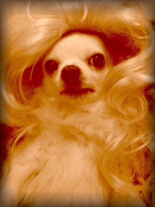 Doggy Stile