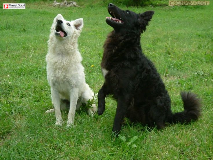 What Breeds Of Dogs Are The Best