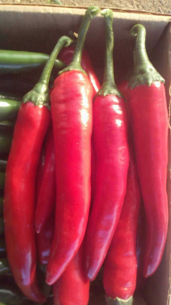 Eksport Perec Perec Dlya Eksporta Egipetskij Perec Eksporterov Hitac Trading Stuffed Peppers Vegetables Carrots