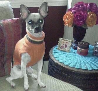 My chihuahua, Gypsie: Little Girls, Animals, Chihuahuas, Dogs, Stuff