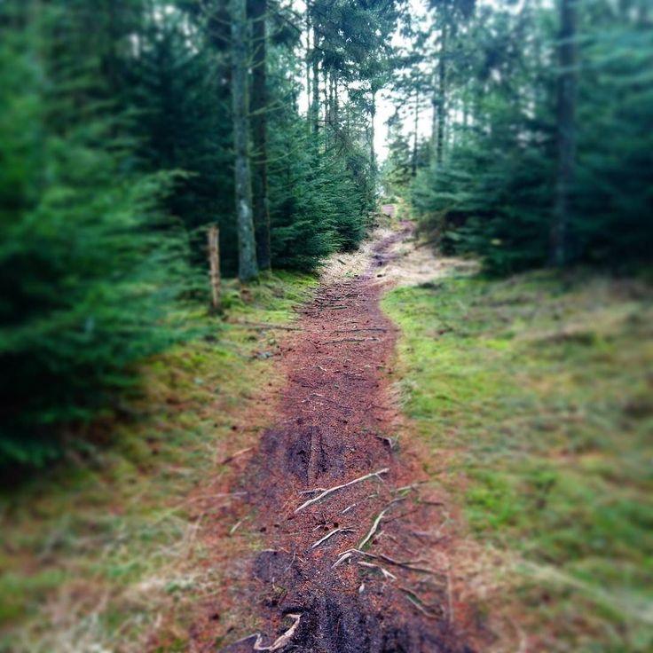 Sidste weekend Trailløb på MTB spor i Gyttegaard Plantage. Kan klart anbefales #gyttegaardplantage #trailrunning #trailløb #weekend #outdoor #outside