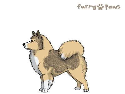 Furry Paws // UCH Kip's Lonely Wolves [3STM 21HH 1.608]'s Kennel