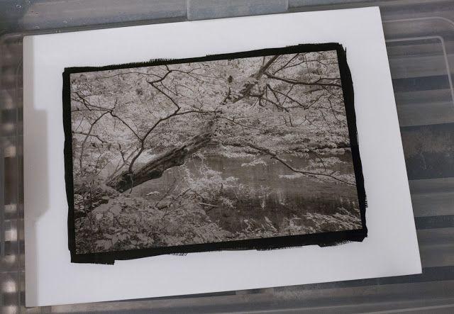 Working Pictures: New Prints in Platinum/Palladium