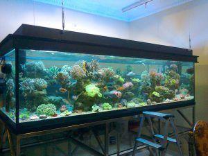 Jual Aquarium Air lautJakarta