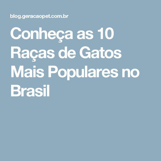 Conheça as 10 Raças de Gatos Mais Populares no Brasil