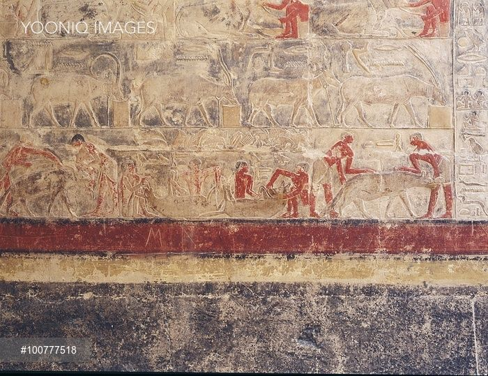 A scene in relief in the tomb of Mereruka, Top: Tethered ...