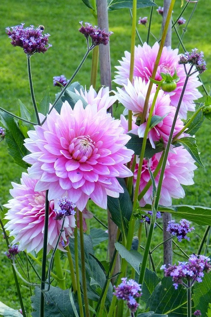 Plants and Bulbs for Planting in Spring