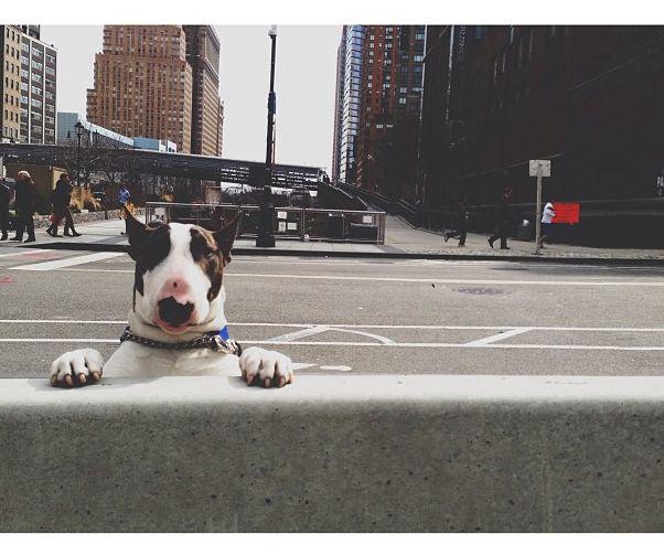 Neville Jacobs - Marc Jacobs' adorable doggie