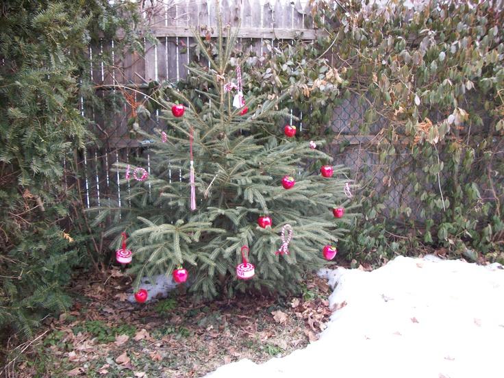 The Martenitsa Tree in my backyard.  Picture was taken March 2011.