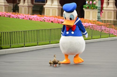 Disney Parks: Donald and the duckies:)    This is just too cute