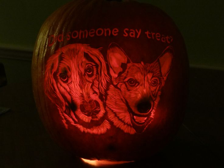 Golden retrievers corgis and pumpkins on pinterest