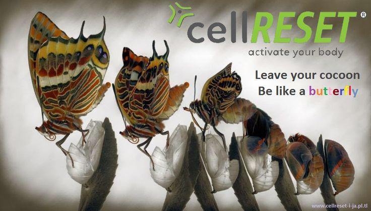 http://www.cellreset-i-ja.pl.tl/