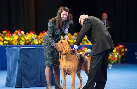 Nathan the Bloodhound Wins the National Dog Show for His Best Thanksgiving Ever http://alphacommedia.com/acom-news/?p=108#more-108  #dogshow #thanksgiving #bestinshow  #acomnews #acommedia #newyork