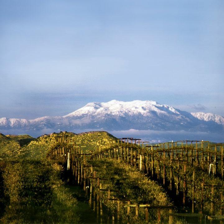 Best Winery Restaurant Temecula
