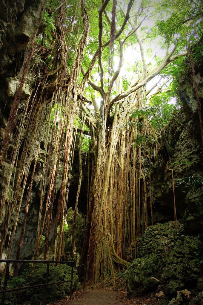 ガンガラーの谷 沖縄