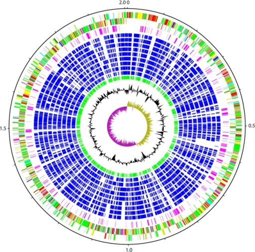 Schematic circular diagram of the S. suis P1/7 genome.Key for the circular diagram (outer to inner): scale (in Mb); annotated CDSs coloured according to predicted function are shown on a pair of concentric circles, representing both coding strands; Streptococcus suis orphan CDSs, purple; orthologue matches shared with the Streptococcal species, S. mutans UA159, S. gordonii Challis CH1, S. sanguinis SK36, S. pyogenes Manfredo, S. equi 4047, S. agalactiae NEM316, S. uberis 0140J, S. pneumoniae…