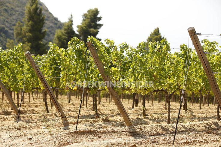 Tsantali Vineyards on Mt.Athos