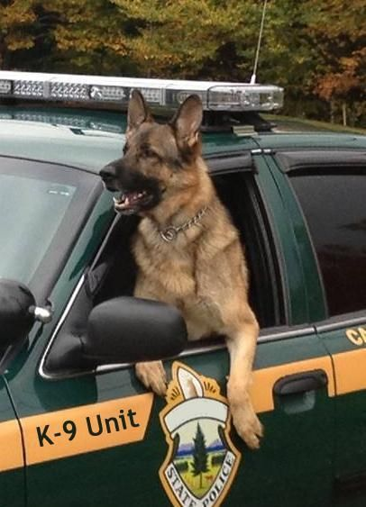 """Handsome K9 Officer Hope you're doing well.From your friends at phoenix dog in home dog training""""k9katelynn"""" see more about Scottsdale dog training at k9katelynn.com! Pinterest with over 20,800 followers! Google plus with over 180,000 views! You tube with over 500 videos and 60,000 views!! LinkedIn over 9,300 associates! Proudly Serving the valley for 11 plus years! Now join us on instant gram! K9katelynn"""