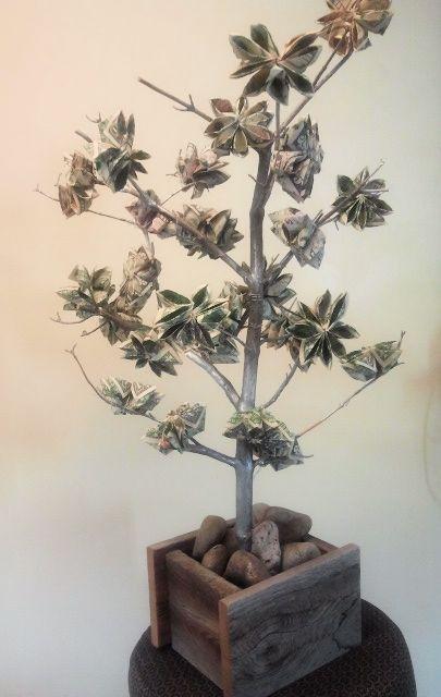 Money Tree Wedding Gift When Grows On Trees