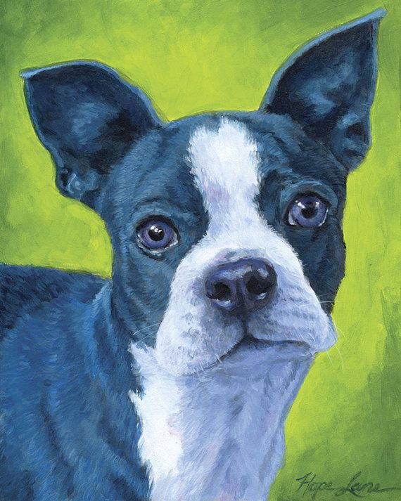"Custom Portrait Painting, Blue and White Boston Terrier, Dog Painting, Boston Terrier Art, 8x10"" by Hope Lane"