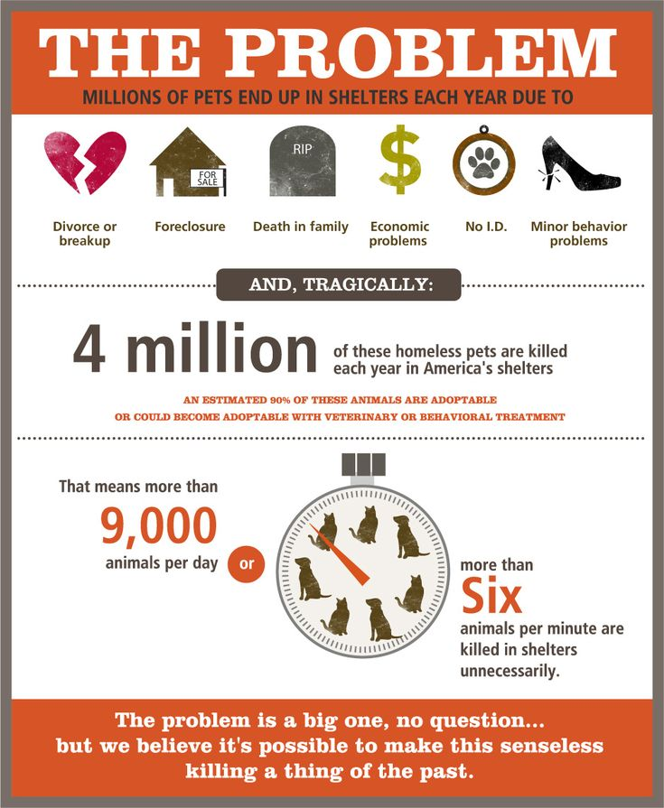 Four million homeless pets are killed each year in America's shelters. Learn more at http://www.bestfriends.org/Our-No-Kill-Mission/The-Problem/#.