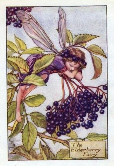 Elderberry Flower Fairy