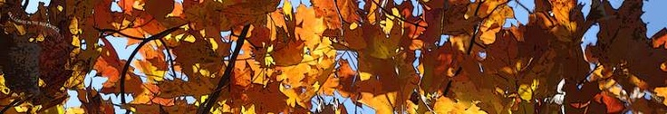 FALL LEAVES IN THE BERKSHIRES