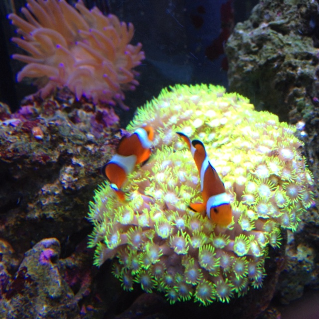 Best 25 marlin nemo ideas on pinterest marlin finding for Marlins fish tank