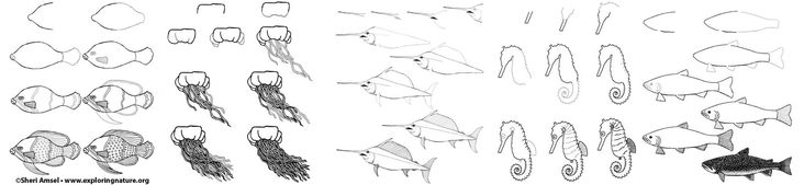 Learn How to Draw Fish and Ocean Animals on Exploringnature.org