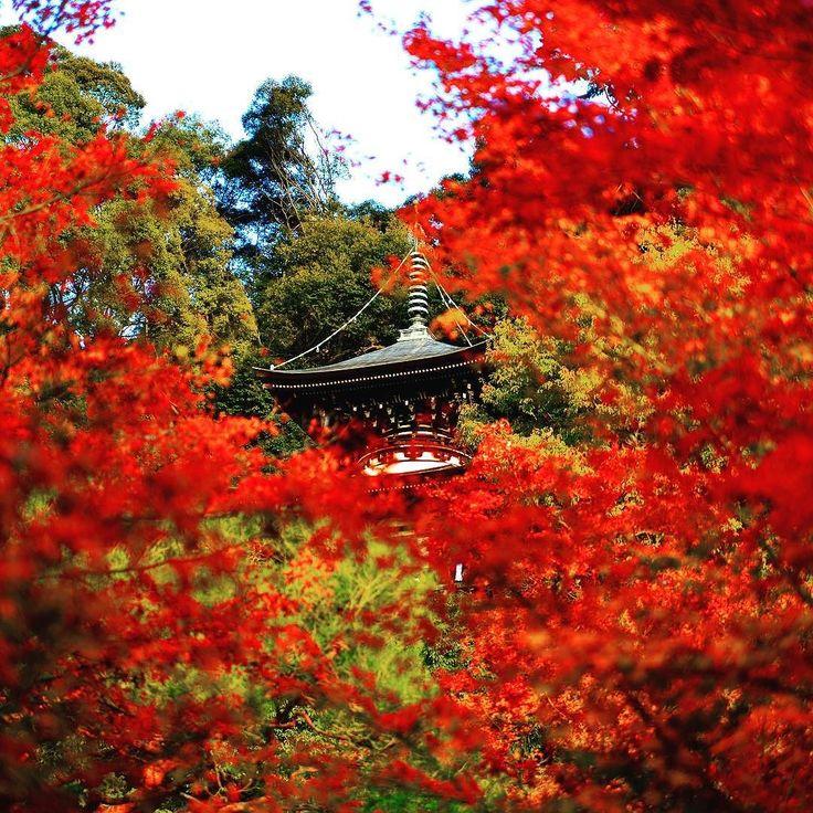 東京カメラ部 Editor's Choice:katsu_mae