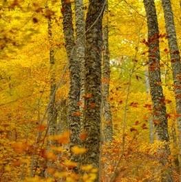 La gama cromática de los bosques asturianos en otoño es IM-PRESIONANTE!! No esperes, disfrútalo estos días en las III Jornadas fotográficas Luces del Norte