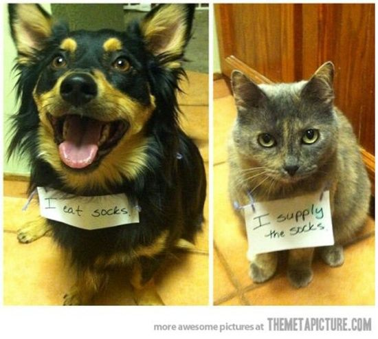 The best of cat shaming - Part 7 - Mommy Has A Potty MouthMommy Has A Potty Mouth