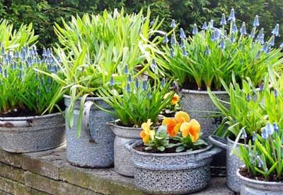 By planting in pots, buckets, whiskey barrels, grow bags, or whatever else you find around the house, you'll be adding aesthetic interest and practicality to your yard and home.