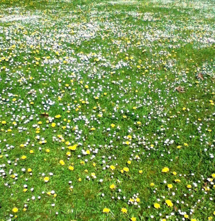 Flower carpet :D