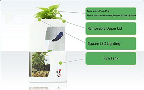 29 best aquaponics images on pinterest aquaponics for Indoor fish farming